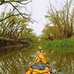 A remar y perderse con el kayak entre los afluentes del río.