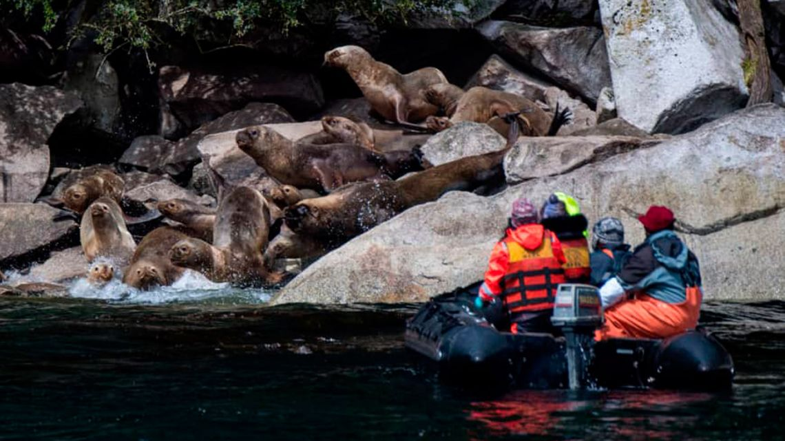 Chilean scientists sail near a colony of South American fur seals in Seno Ballena fjord at Santa Ines island in Punta Arenas, Magallanes region, southern Chile.