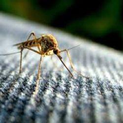Aparentemente, este tejido sería a prueba de mosquitos.