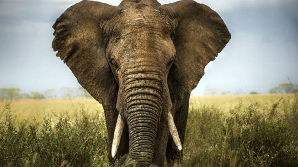 Los elefantes traen polémica en Botsuana.