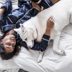 Los perros son los mejores compañeros de sueño