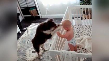 bebes perro 09092019