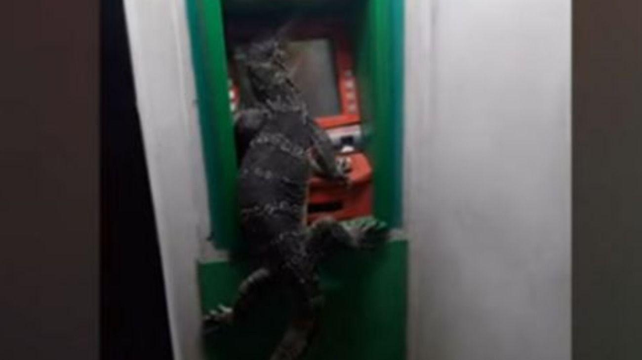 El reptil quedó encerrado en el cajero automático en Bangkok y despertó todo tipo de reacciones entre quienes se toparon con él.