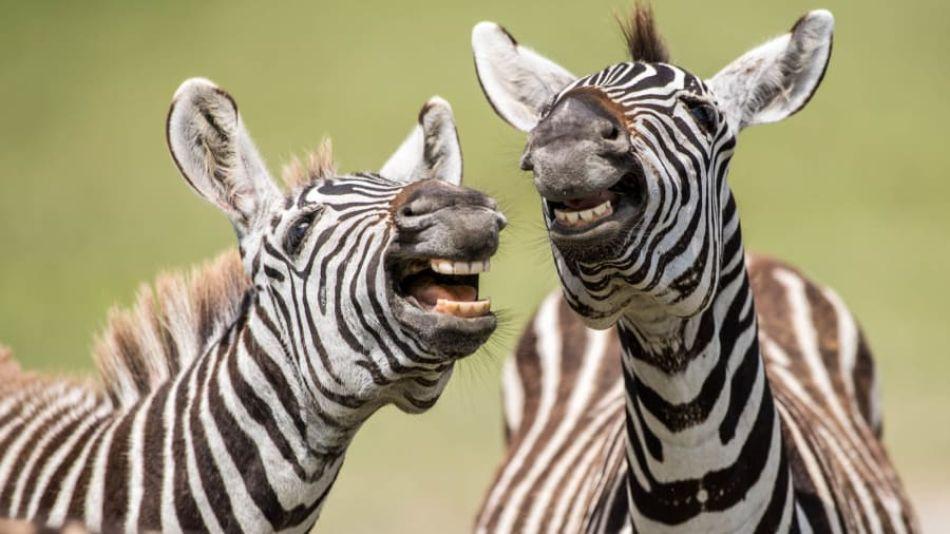 Comedy Wildlife 2019