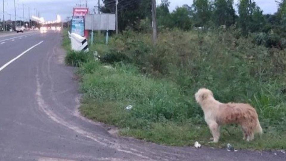 El propietario del perro, de apellido Noi, explicó que iban de vacaciones cuando se detuvieron en una estación de servicio y se dieron cuenta que BonBon ya no estaba en el auto.