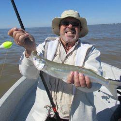 En el Río de la Plata no rige la veda de pesca ya que son aguas abiertas. Y tanto en este como la región del Delta del Paraná, bajo jurisdicción de la Provincia de Buenos Aires, quedan excluidos de los alcances de la disposición de la ex Dirección de Desarrollo Pesquero Nº 89/08. De todas formas cuidemos la especie.