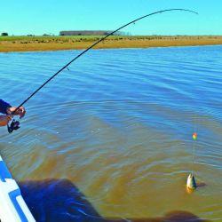Cuál es el límite de tarariras por pescador/día