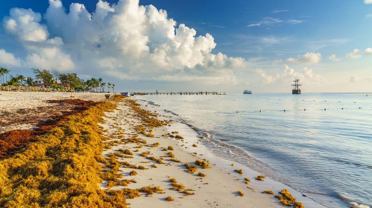 Quintana Roo. La mitad de las playas más visitadas ya no tienen algas.