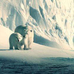 El documental Nuestro Planeta