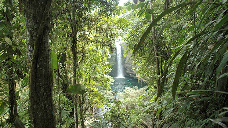 La Amazonía ecuatoriana, uno de los cuatro mundos a los que se ingresa desde Quito.