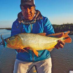 Alfredo Solís con uno de sus tantos dorados pescados en fly. La mosca negra combinada con azul dio los mejores resultados.