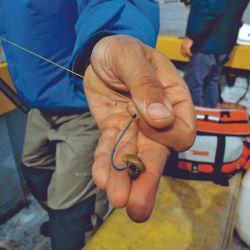 Logramos pejes al garete y corvinas en fondos de tosca con mejillones asiáticos de los que se alimentan las rubias.