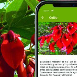 Se descarga de manera gratuita y está disponible para sistemas Android y iOS. Incluye datos de contacto de los prestadores habilitados por P.N., y fichas de flora y fauna.
