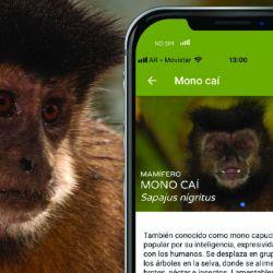 """La Secretaría de Turismo de la Nación, la Administración de Parques Nacionales (APN) y Aves Argentinas presentaron """"Argentina Natural"""", una aplicación para celulares."""