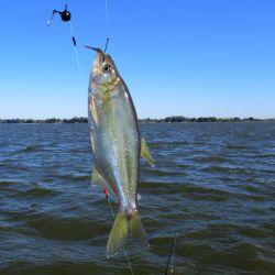 Como la cuota permitida de 10 piezas por pescador ya estaba cubierta, decidimos regresar a la costa.