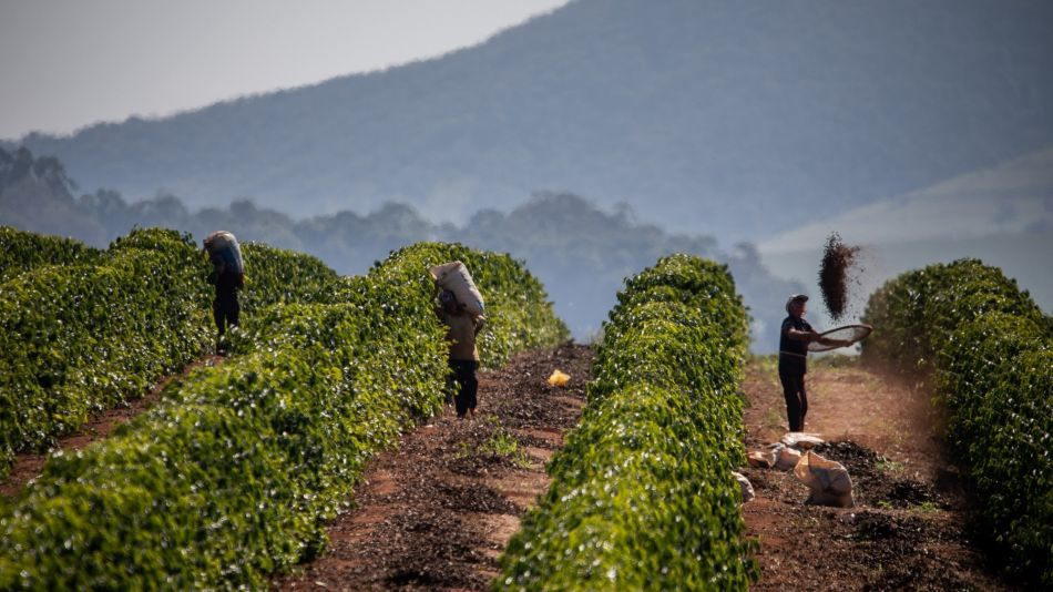 Parched Coffee Farms in Brazil Undermine 'Mega' Crop Outlook