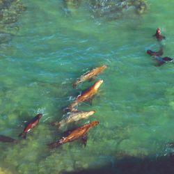 En la Reserva Punta Bermeja está la colonia más grande de lobos marinos de un pelo de Sudamérica, con más de 4.000 individuos permanentes.