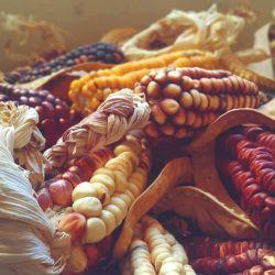 Variados y coloridos marlos, típicos de la quebrada.