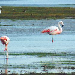 En la Laguna de Pozuelos; si nos acercamos a su borde, podremos avistar según la época de año las hermosas y coloridas colonias de flamencos.