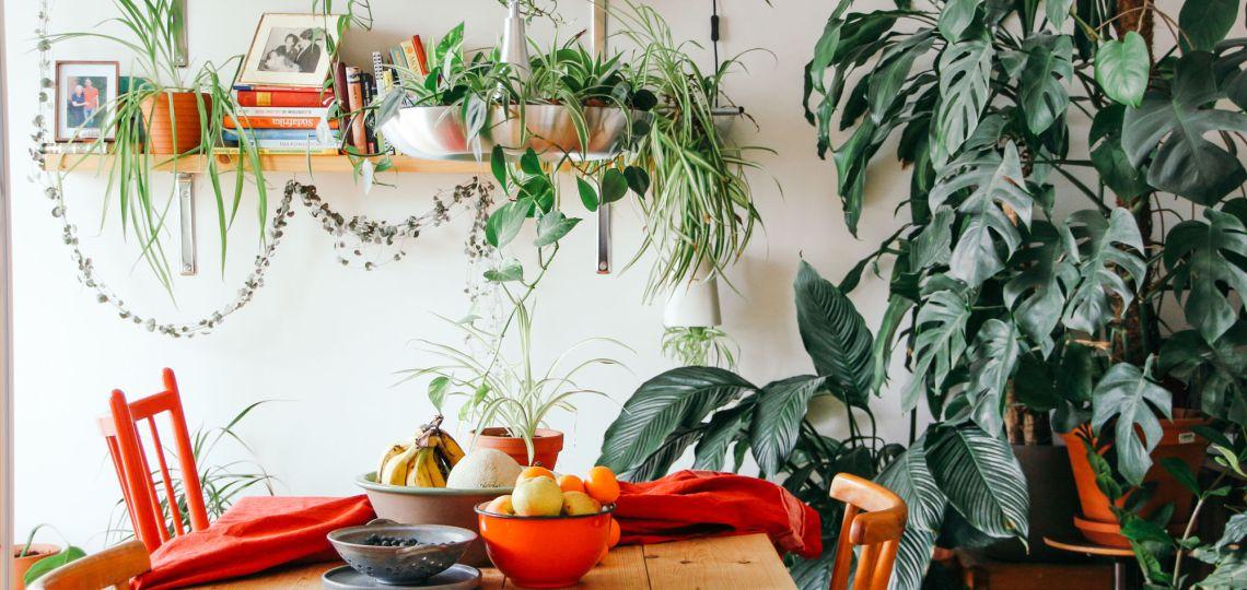 Plantas en el hogar: guía para elegir las correctas