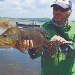 el mejor tucunaré amarillo de la salida, con popper de vadeo, a pez visto.