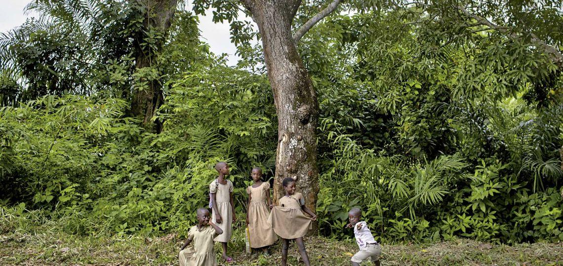 Agroforestería: el ejemplo de cosecha en el África subsahariana