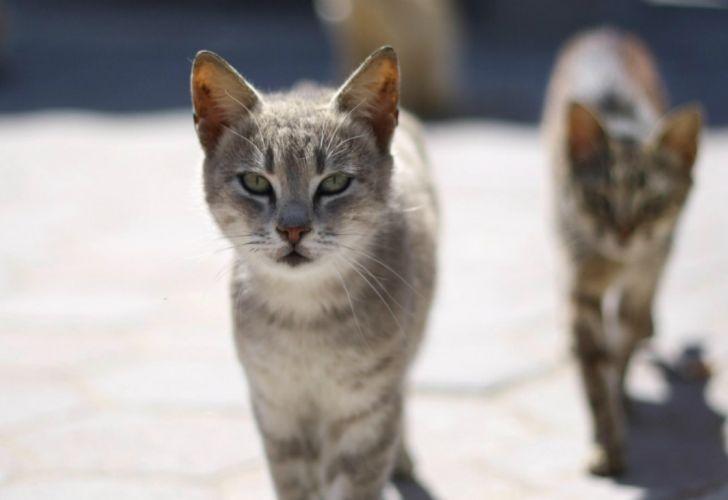 Miami sale a la caza de gatos callejeros con un nuevo programa de  voluntarios pagos | Perfil