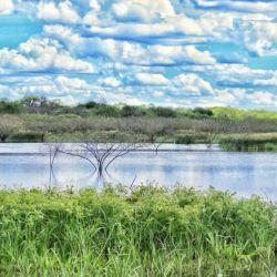 Esta área natural es hogar de diversos paisajes como sabanas, lagunas y esteros.