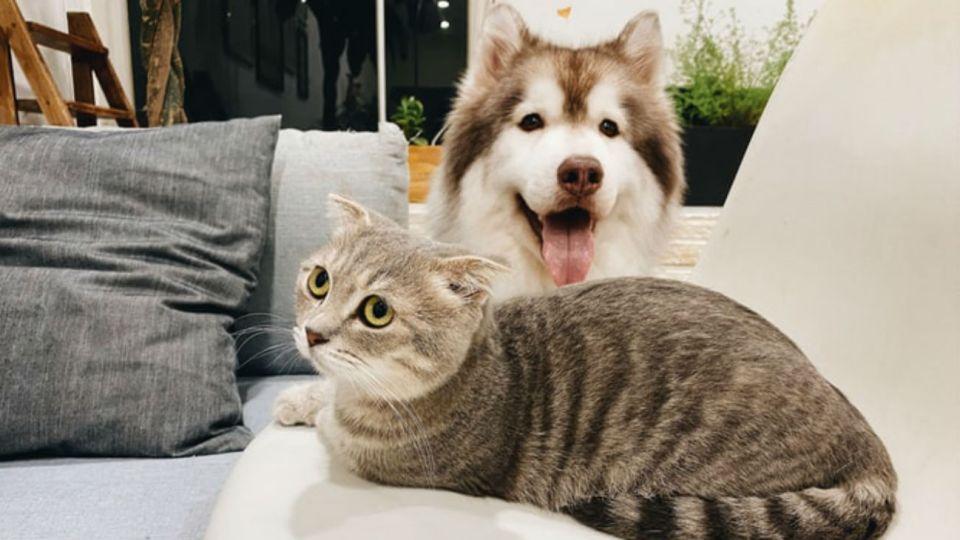 perros gatosq