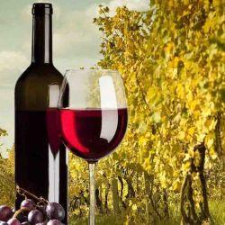 Desde 2013, todos los 24 de noviembre se celebra en la Argentina su día como iniciativa de la Secretaría de Agroindustria y la Corporación Vitivinícola Argentina (COVIAR) para fomentar el consumo de nuestra bebida nacional.
