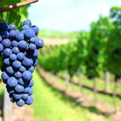 Según datos del Ministerio de Agricultura, Ganadería y Pesca de Nación, el complejo vitivinícola es una de las 10 principales cadenas exportadoras del país, con casi 500 empresas que llegan a 127 países