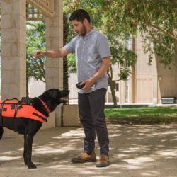 Ingenieros israelíes crearon un chaleco de control remoto para perros que le transmite órdenes al animal a través de una vibración sin dolor