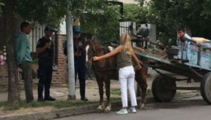 El caballo que rescataron y le sacaron a una familia generó una fuerte discusión en redes.