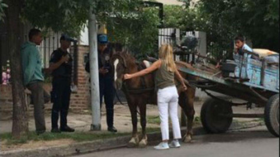 caballo rescate 27112019