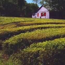 La Ruta de la Yerba Mate surgió en 2002 con el objetivo de que la zona productora de yerba pudiera ser conocida y visitada por los turistas.