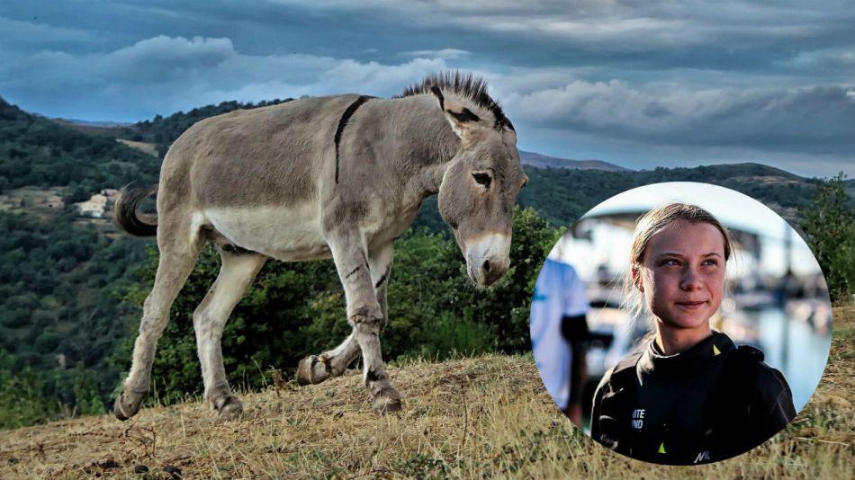 La activista sueca Greta Thunberg llegó a Lisboa en velero.