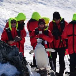 Tourists take pictures of a Barbijo penguin (Pygoscelis antarcticus) at Orne Harbur in South Shetland Islands, Antarctica