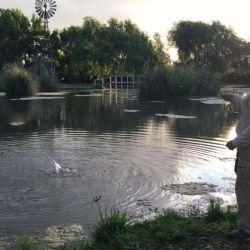 La primicia es el nuevo ámbito conocido como Campo La Odisea, ubicado en la localidad de Abasto.