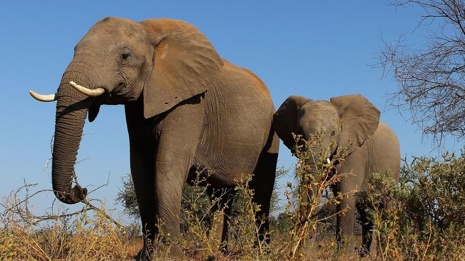 elephants elephant GETTY Sub