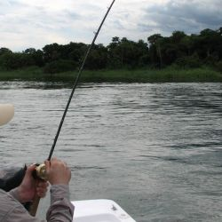El conocimiento del pez, el medio y el equipo te ayudará a tener menos enganches.