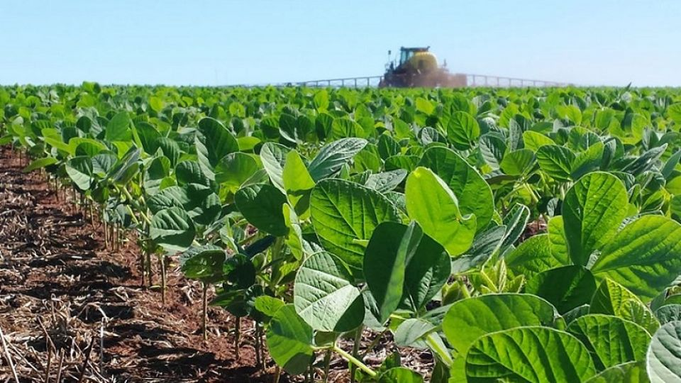 La siembra de soja logró cubrir el 61,3% de la superficie proyectada en 17.700.000 hectáreas.