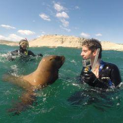 Los lobos marinos usan el hocico de la misma forma que nosotros usamos las manos.