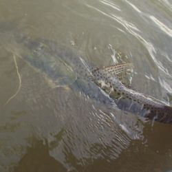 Si el pez tiene el anzuelo tragado, cortá la línea y devolvelo de inmediato.