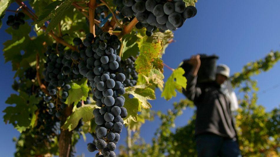 La buena cosecha, el tipo de cambio y un buen nivel de stock impulsaron el aumento de las exportaciones vitivinícolas.