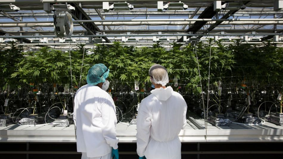 Inside CannTrustHoldings Inc. Niagara Perpetual Harvest Greenhouse As Big Money Tests Marijuana Waters