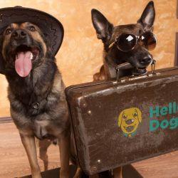 Los perros que entren a Uruguay 8. deben contar con un microchip compatible con las Normas ISO Nº 11784 o 11785.