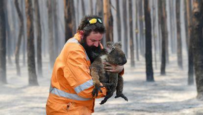 Se teme que cientos de koalas hayan muerto en los incendios y, a medida que pasan los días, la falta de agua disminuye aún más sus posibilidades de supervivencia.