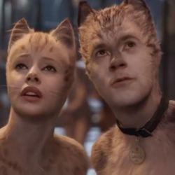 Cats | Foto:Cedoc