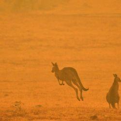 Famosos comprometidos con los incendios en Australia.