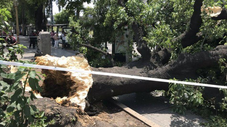 Árbol caído en el barrio porteño de Constitución. Una mujer herida.